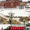 lhasa-100